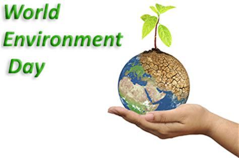 Essay about environment protection and conservation